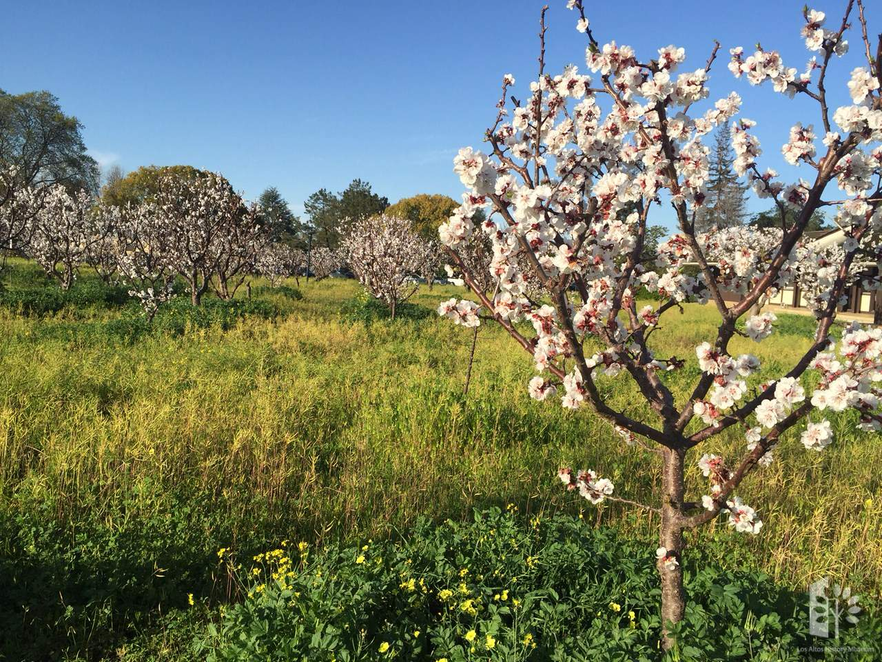 Canceled - Heritage Orchard Workshop